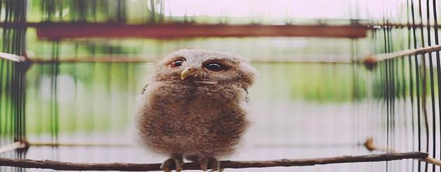 Что, если в вашем доме поселится сова?