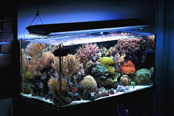 Вроде и морской, но вода пресная: оформляем псевдоморской аквариум
