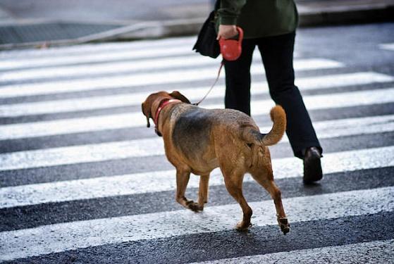 Прогулка с собакой: основные правила безопасности
