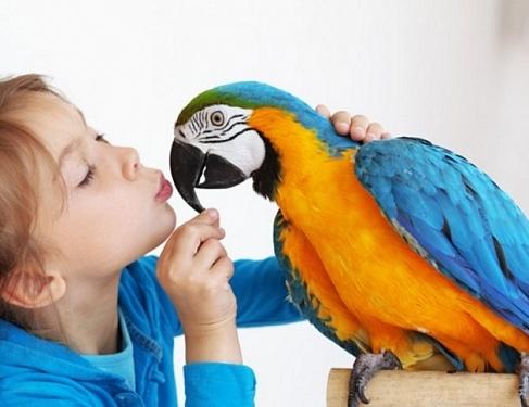 Вылетел, но обещал вернуться: как загнать попугая в клетку