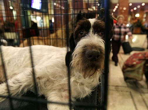Собачья клетка: друг или враг питомца?