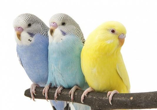 Учимся не на ошибках: чего нельзя делать, приручая и заботясь о попугаях