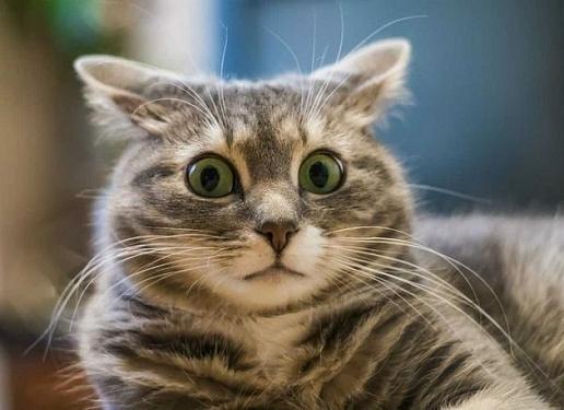 Кошки - это жидкость, способная продлевать жизнь человека