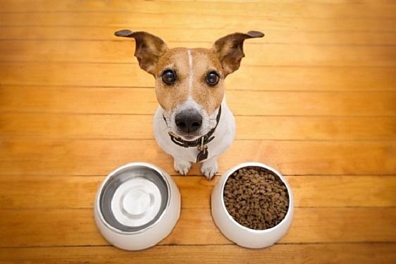 Правильная собачья утварь: какие миски должны быть у вашей собаки?