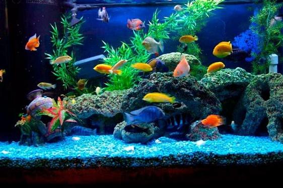 10 самых дорогих аквариумных рыбок