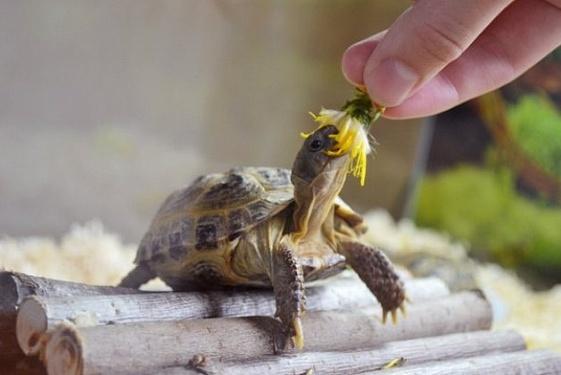 Террариум для сухопутной черепахи - оснащаем правильно